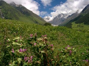 Valley Of Flowers Landscape